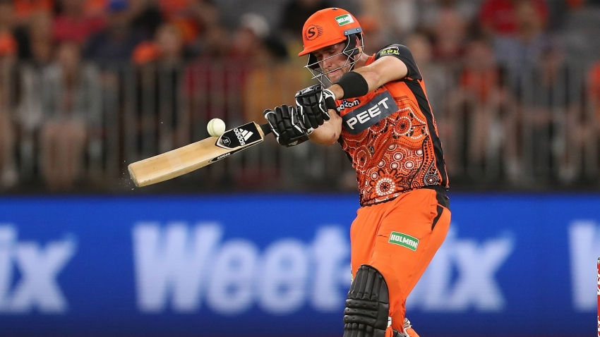Livingstone answers Hales as Scorchers move above Thunder